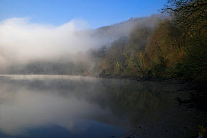 Early morning mist over the River Dart, Sharpham, Devon, UK  -  Rob Cousins