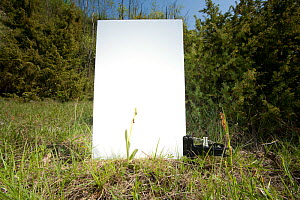Field studio for photographing Fly orchid (Ophrys insectifera) in grassland, Optevoz, Isere, Rhones-Alpes, France, April. meetyourneighbours.net project  -  MYN / Denis Palanque