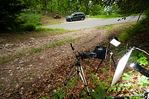 Field studio for photographing Peach-leaved bellflower (Campanula persicifolia) woodland, Savoie, France, June. meetyourneighbours.net project  -  MYN / Denis Palanque