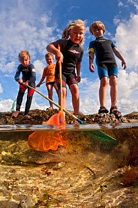Children enjoying dipping in rockpools at low tide in Falmouth, Cornwall, England, UK, July, all model released  -  Alex Mustard / 2020VISION