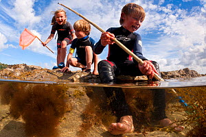 RF- Children enjoying dipping in rockpools at low tide in Falmouth, Cornwall, England, UK, July. Did you know? You are never more than 16 miles from the sea in Cornwall. (This image may be licensed ei... - Alex Mustard / 2020VISION