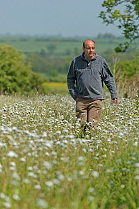 Farm manager, Chris Bailey, walking through herb-rich conservation margin of Ox-eye daisies (Leucanthemum vulgare) at RSPB's Hope Farm, Cambridgeshire, UK, May 2011,  model released - Chris Gomersall / 2020VISION