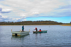 Placing a tern raft to encourage nesting Common Terns (Sterna hirundo) on Ormesby Broad, part of Trinity Broads complex in Norfolk Broads, UK, April 2012  -  David Tipling / 2020VISION