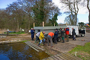 Volunteers launching a tern raft to attract nesting Common Terns (Sterna hirundo) on Filby Broad, Trinity Broads, Norfolk Broads, UK, April 2012, sequence 1/7 - David Tipling / 2020VISION