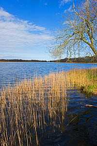 View across Ormesby Little Broad in Trinity Broads complex, Norfolk Broads, UK, April 2012 - David Tipling / 2020VISION
