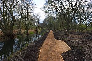 New path to look-out hide over Oremby Little Broad, Trinity Broads, Norfolk, UK, April 2012 - David Tipling / 2020VISION