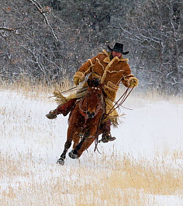 Cowboy galloping through snow, wearing thick sheepskin coat, Wyoming, USA, February 2012, model released  -  Carol Walker