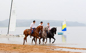 Lusitano horse, men and woman riding stallions beside water, practising dressage steps, Portugal, May 2011, model released  -  Carol Walker