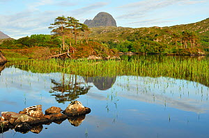 A view of Suilven over a highland loch with islands of scots pine and birch. Sutherland, Scotland, June 2011.  -  Fergus Gill / 2020VISION