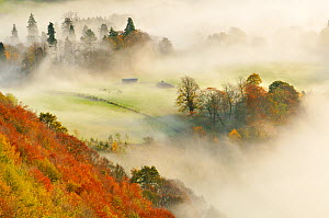 A misty morning over a mixed woodland in autumn, Kinnoull Hill Woodland Park, Perthshire, Scotland, November 2011. Highly commended in the Wild Woods Category of the British Wildlife Photography Award...  -  Fergus  Gill / 2020VISION