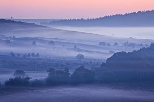 View over New Forest lowland heathland from Rockford Common at dawn. Linwood, New Forest National Park, Hampshire, England, UK - Guy Edwardes / 2020VISION