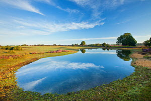 View over New Forest flood pool at Fritham Cross at dawn, New Forest National Park, Hampshire, England, UK, August. - Guy Edwardes / 2020VISION