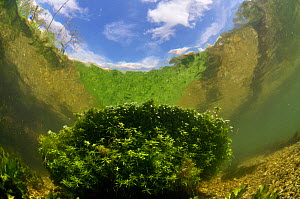 River Itchen, with aquatic plants reflected in the surface. Blunt-fruited Water-starwort (Callitriche obtusangula). Ovington, Hampshire, England, May.  -  Linda Pitkin / 2020VISION