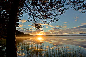 Loch Garten and Abernethy Forest at sunrise. Cairngorms National Park, Scotland, UK, September 2011. Did you know? Loch Garten is home to some of the UK's rarer species including Ospreys, Scottish Cro... - Mark Hamblin / 2020VISION