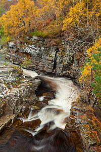 River Tromie flowing through gorge in autumn woodland. Cairngorms National Park, Scotland, UK, March.  -  Mark Hamblin / 2020VISION