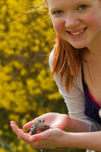 Girl holding Common frog (Rana temporaria), Warwickshire, England, UK, March. Model released.  -  Mark Hamblin / 2020VISION