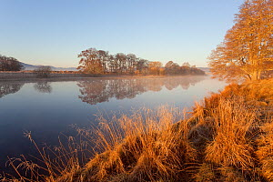 River Spey at dawn in spring, Cairngorms National Park, Scotland, March 2012.  -  Peter Cairns / 2020VISION
