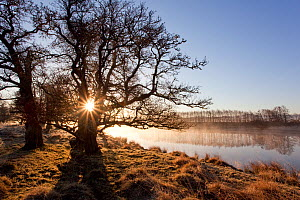 River Spey in spring, sun rising behind trres, Cairngorms National Park, Scotland, March 2012. - Peter Cairns / 2020VISION