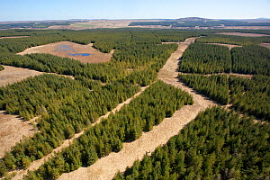 RF- Aerial view of blocks of forestry plantation planted on blanket bog. Forsinard, Caithness, Scotland, UK, May. (This image may be licensed either as rights managed or royalty free.) - Peter  Cairns / 2020VISION