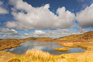 Upland peatbog pool. Pumlumon Fawr, Cambrian Mountains, Wales, January 2012.  -  Peter Cairns / 2020VISION