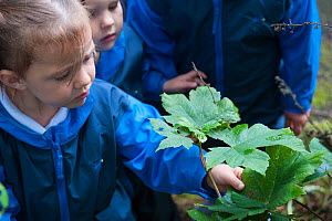 Child from Rowley View Nursery School examining leaf at the Moorcroft Environmental Centre Forest School, Moorcroft Wood, Moxley, Walsall, West Midlands, July 2011. Model released.  -  Paul Harris / 2020VISION