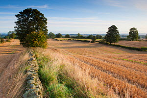Stubble left in fields after harvest, Haregill Lodge Farm, Ellingstring, North Yorkshire, England, UK, September. Did you know? The unique culture, history and dialect of Yorkshire is celebrated on th...  -  Paul Harris / 2020VISION