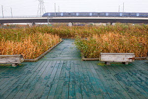 Visitor walkway at Rainham Marshes RSPB reserve with train passing in the background, Essex, England, UK, November  -  Paul Harris / 2020VISION