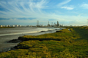 Edge of saltmarsh with oil storage depot in the background, Canvey Island, Essex, England, UK, February - Terry Whittaker / 2020VISION