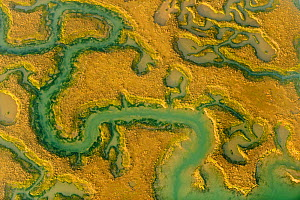 Water channels making patterns in saltmarsh, seen from the air. Abbotts Hall Farm, Essex, UK, April 2012. (This image may be licensed either as rights managed or royalty free.)  -  Terry Whittaker / 2020VISION