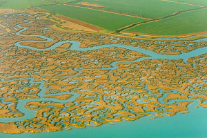 Saltmarsh and reclaimed agricultural land from the air. Abbotts Hall Farm, Essex, UK, March 2012. - Terry Whittaker / 2020VISION