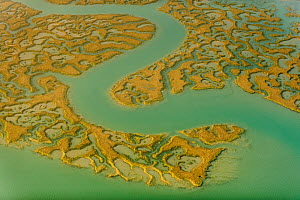 Water channels making patterns in saltmarsh, seen from the air. Abbotts Hall Farm, Essex, UK, April 2012. Did you know? Salt marshes are a great natural defence against sea level rise.  -  Terry Whittaker / 2020VISION
