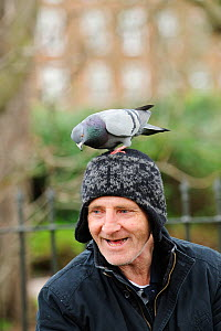 Man with Feral pigeon (Columba livia) perched on his head, Regents Park, London, England, UK, February  -  Terry Whittaker / 2020VISION