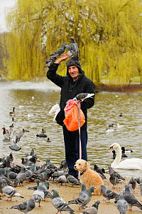 Man with dog feeding Feral pigeons (Columba livia), with some perched on his head, Regents Park, London, England, UK, February  -  Terry Whittaker / 2020VISION