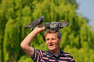 Man with feral pigeons (Columba livia) perched on his head, Regents Park, London, England, UK, April  -  Terry Whittaker / 2020VISION