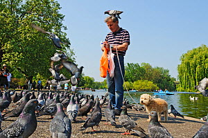 Man with dog feeding Feral pigeons (Columba livia), with one perched on his head, Regents Park, London, England, UK, April - Terry Whittaker / 2020VISION