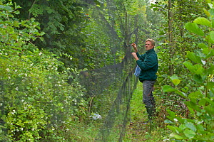Man removing birds from mist net caught for ringing, in a allotment garden, Grande-Synthe, Dunkirk, France, September 2010, model released  -  Wild Wonders of Europe / Préau