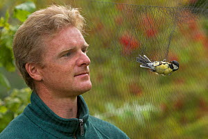 Man looking at Great tit (Parus major) caught in mist net for ringing, in allotment, Grande-Synthe, Dunkirk, France, September 2010, model released  -  Wild Wonders of Europe / Préau