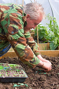 Unemployed volunteer planting out cabbage and vegetable plants in project to encourage sustainable food production from unemployed volunteers, Blaen y Maes Swansea, Wales, UK 2009. No release availabl...  -  David Woodfall
