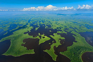 Aerial view of Everglades National Park, Florida, USA, February 2012 - Juan Carlos Munoz