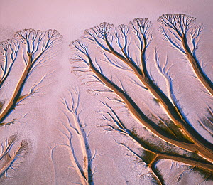 Colorado River Delta, with watercourse sculpted patterns eroded into the salt / silt flats near the Sea of Cortez, La Reserva del Golfo, Baja, Mexico  -  Jack Dykinga