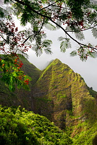 Iao Valley State Park, with flowering Heleconia branches framing the lush valley walls in morning fog, Maui, Hawaii, USA - Jack Dykinga