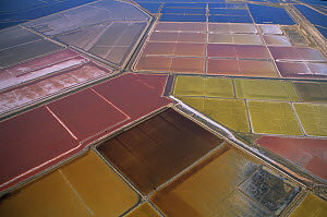 Arial view of coloured salt pans, colour is determined by the concentration of various elements, Salins de Giraud, Camargue, Southern France - Jean E. Roche