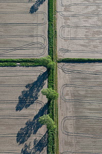 Aerial view of tracks and poplar trees beside dry rice fields, Camargue, Southern France, May 2009  -  Jean E. Roche