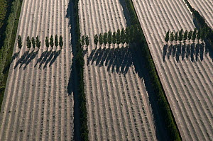 Aerial view of fruit trees covered with nets and poplar trees planted to protect them against the wind, Camargue, Southern France, May 2009  -  Jean E. Roche