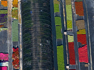 Aerial view of intensive flower production, Arles, Camargue, southern France, May 2009  -  Jean E. Roche
