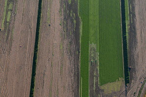 Aerial view of Salad crop, Beaucaire, Camargue, Southern France, November 2008  -  Jean E. Roche