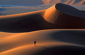 Person walking along sand dunes, Namib Desert, Namibia, Southern Africa. Model released.  -  David Noton