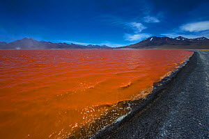 'Laguna Colorada' or 'Red Lagoon' with mountains beyond. The colouration is due to both sediments and red-algae. Eduardo Avaroa national reserve, Bolivian altiplano at 4780 m.  -  Daniel Heuclin