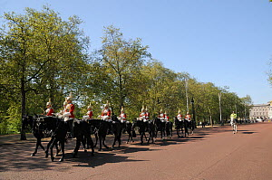 Horse Guards parading on The Mall, past avenue of London Plane Trees (Platanus x hispanica), with Buckingham Palace in the background, London, UK, May. 2012  -  Nick Upton