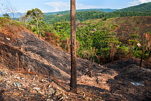 Landscape of deforested Cloud forest habitat, the forest is cleared to make room for Coca (Erythroxylum coca) plantations, Bolivia, November  -  Roy Mangersnes